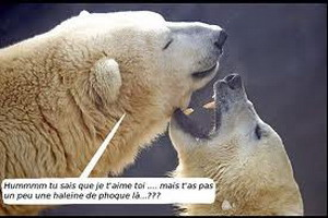 La Revanche des ours 2 novembre 2011