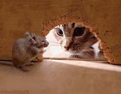 Jouer au chat et à la souris 29 juillet 2012