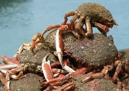 Un panier de crabes 21 mars 2013